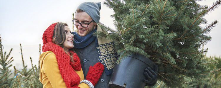 El abeto, el árbol de Navidad por excelencia