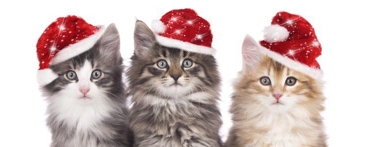 A los gatos también les gusta disfrazarse
