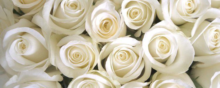 Las rosas de Navidad son menos utilizadas pero también muy bonitas
