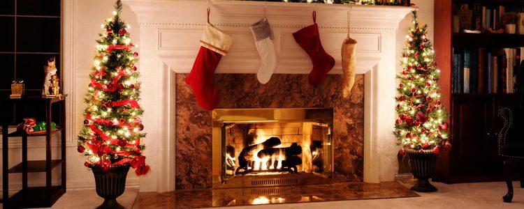 Las plantas son parte fundamental de la decoración navideña