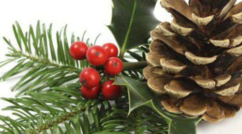 Acebo, la planta de la Navidad