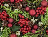 Acebo: características y cuidados de la planta de Navidad