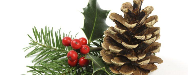 Acebo, planta decorativa de la Navidad[
