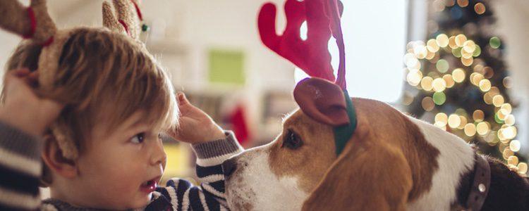 Nuestras mascotas también celebran la Navidad como el resto de la familia