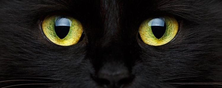 Existen supersticiones como la fecha de nacimiento de algún familiar o pasar el boleto por el lomo de un gato negro