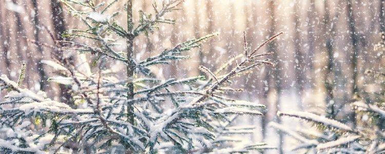 Los árboles blancos generando el efecto de la nieve no deberán recargarse en la decoración
