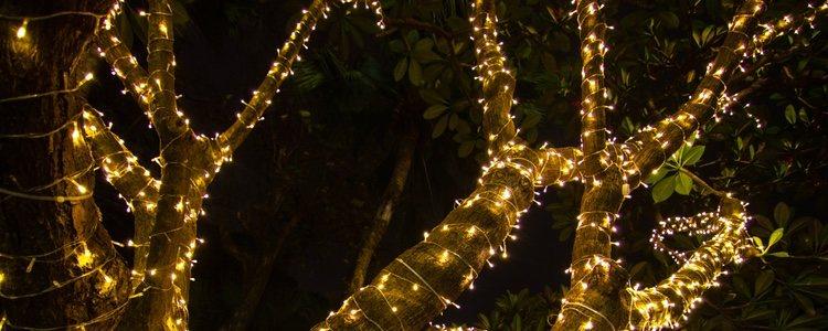 Es una gran idea comprar luces navideñas para envolver un árbol