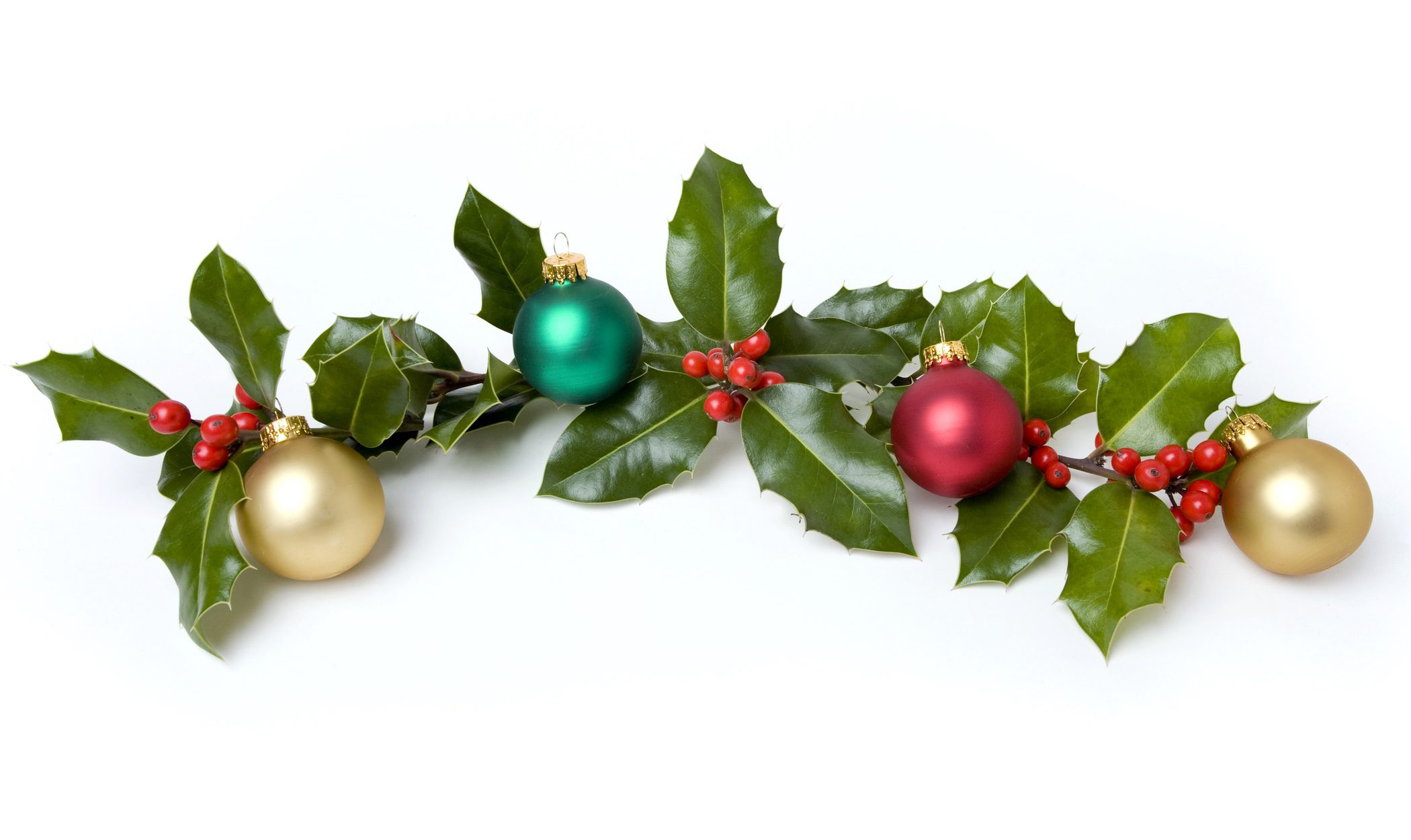 Acebo caracter sticas y cuidados de la planta de navidad bekia navidad - Cuidados planta navidad ...