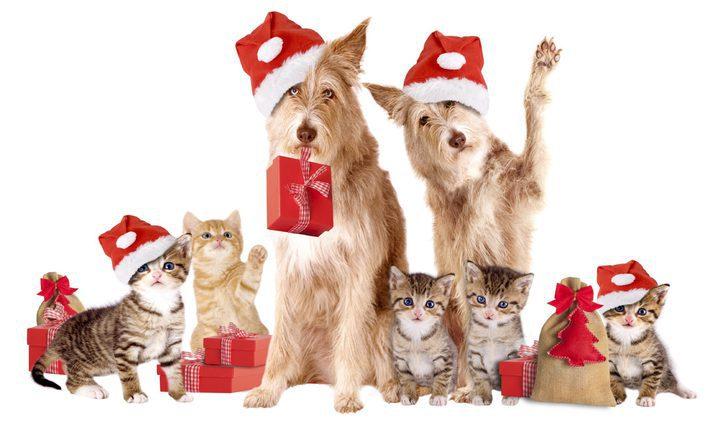 Disfraza a tu mascota por Navidad