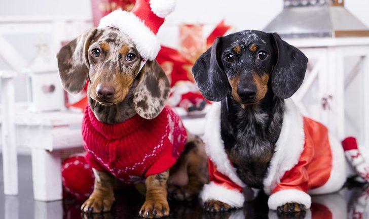 Jerseys de Navidad para perros