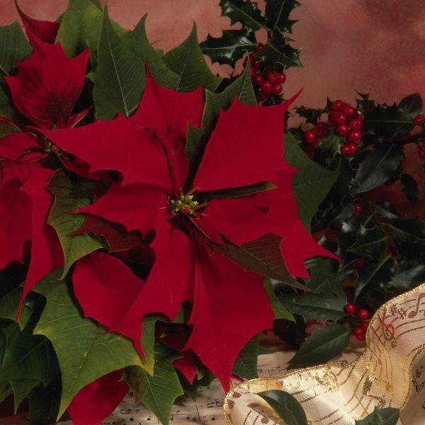 Día de navidad: Cómo se celebra